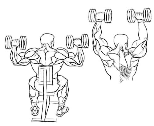 shoulderdumbbellpress