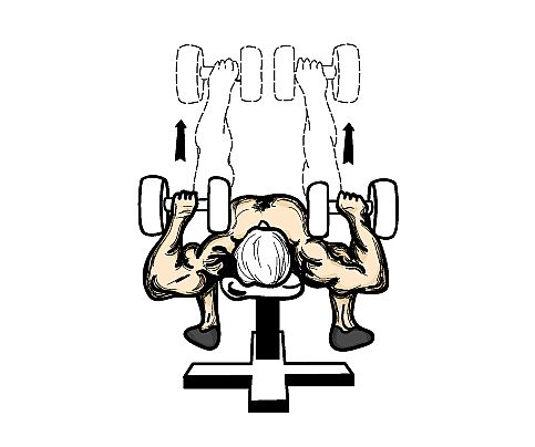 dumbell_press