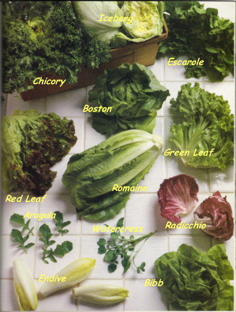 lettucevarieties