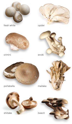mushroomvarieties