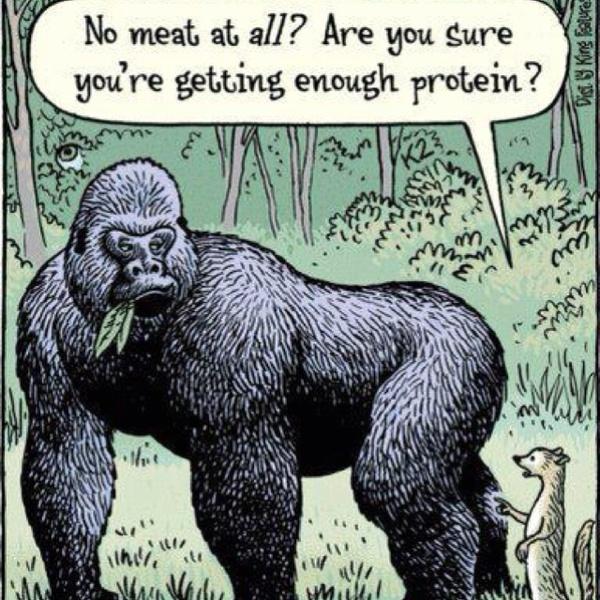 Gorillaprotein